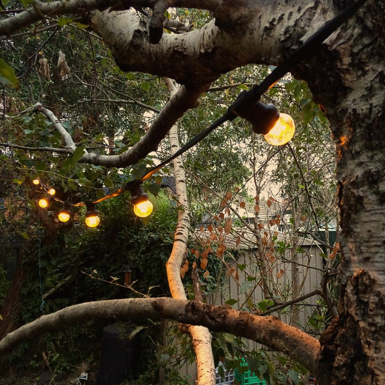 24Volt LED party lights from trees 750x7501