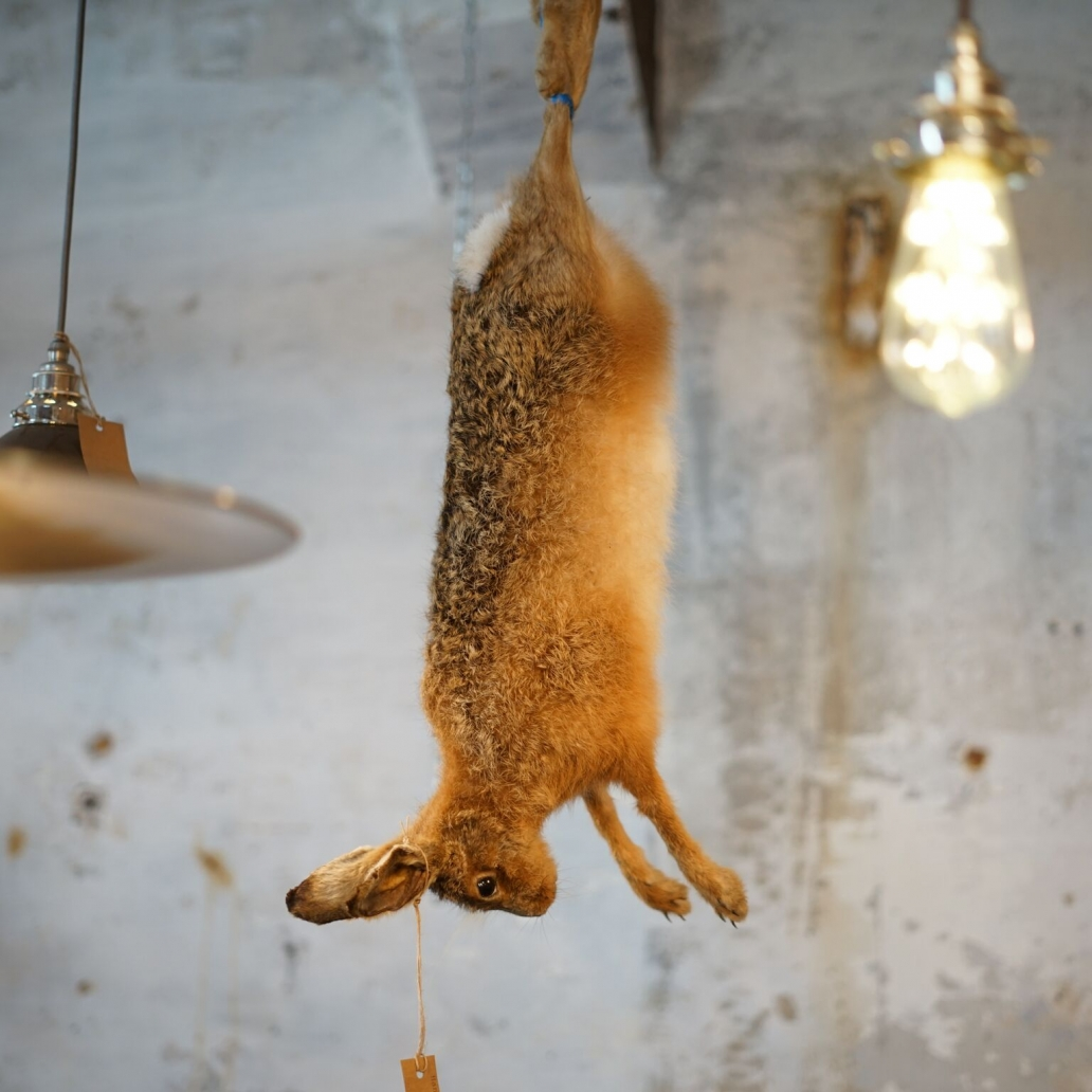 HANGING HARE1