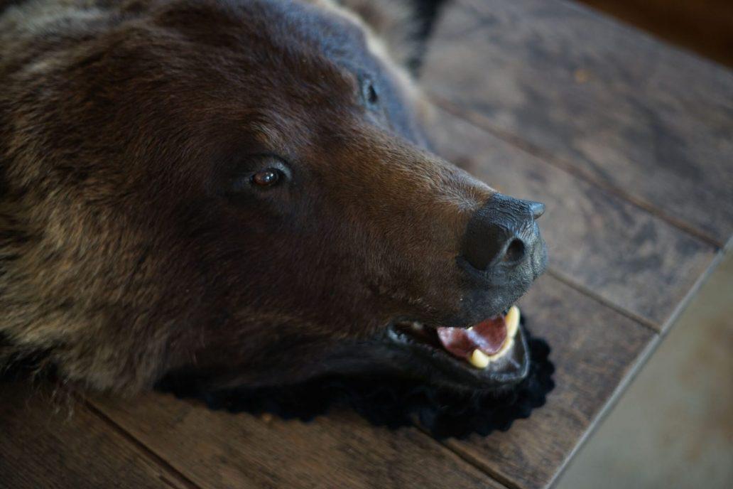bear 43