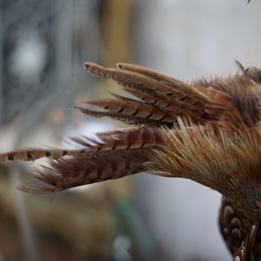 hanging pheasant3