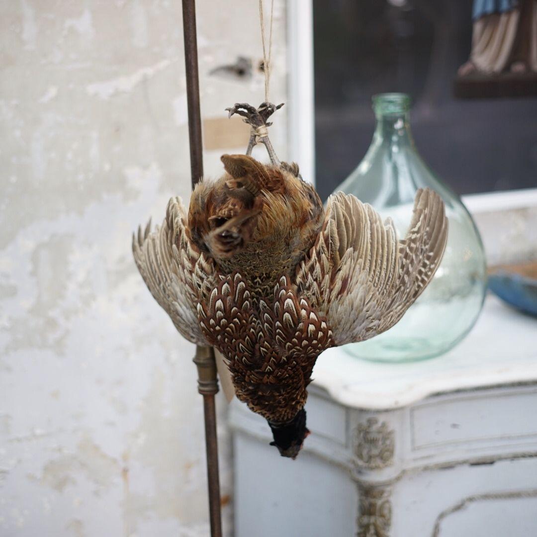 hanging pheasant4
