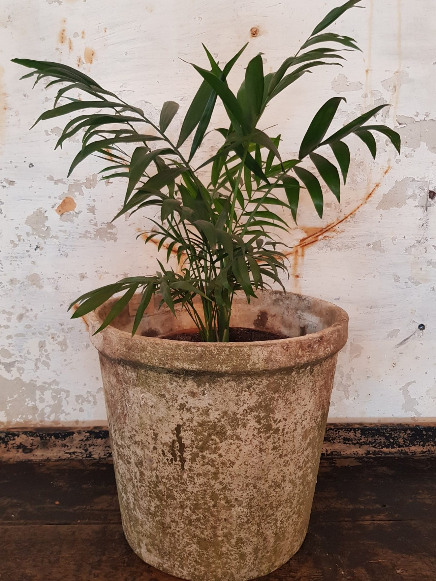 bucket-planter2