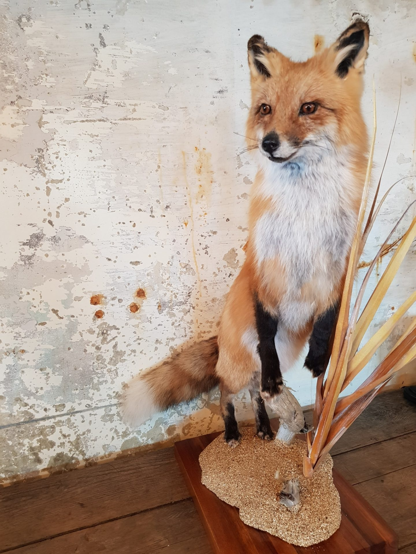 fox1.jpg0_