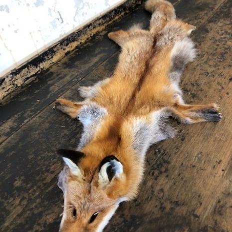 foxskin3