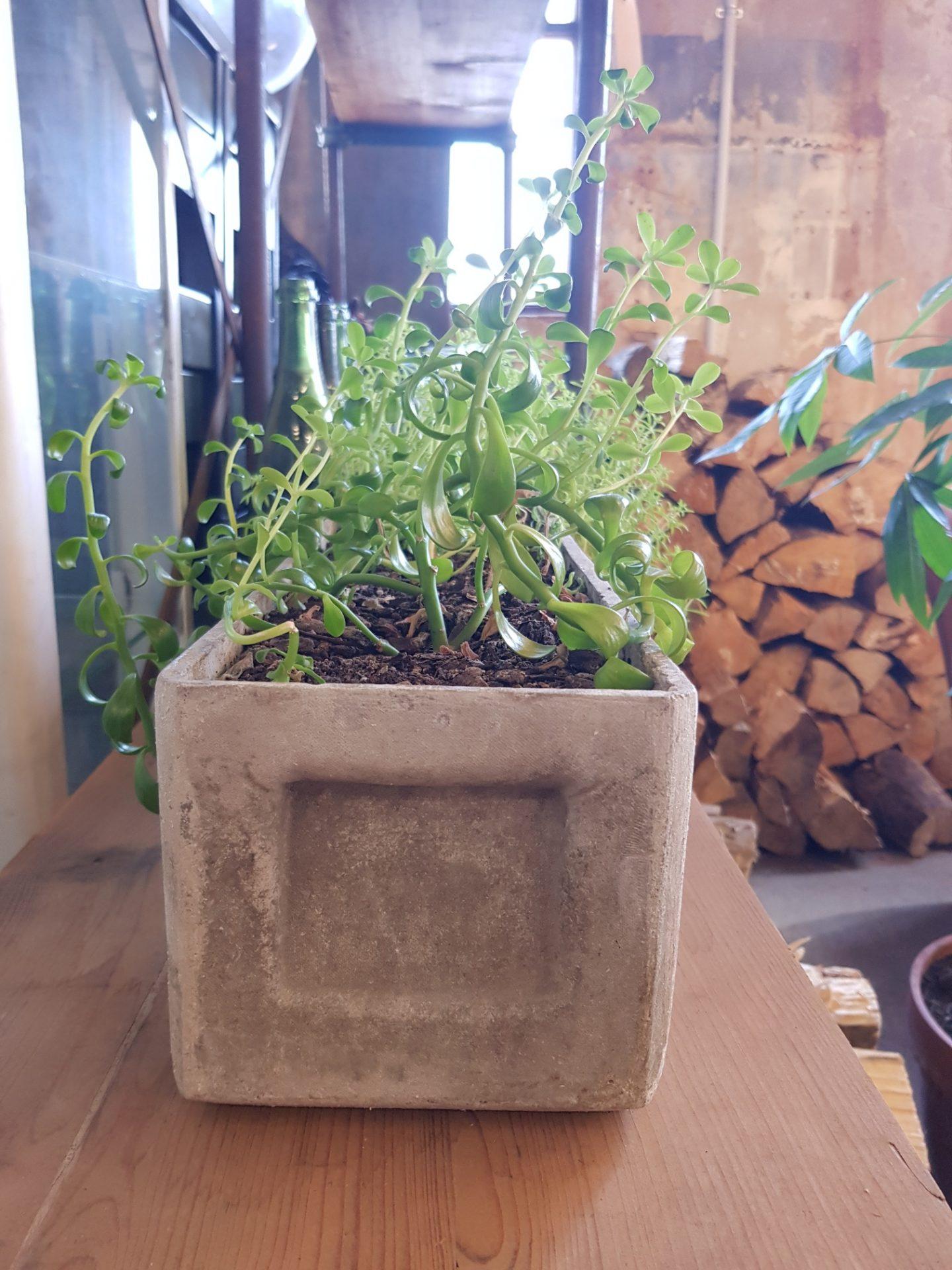 trough-planter1