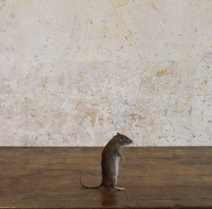 rat1-2