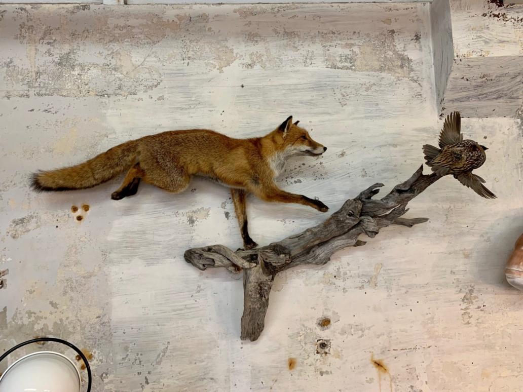 foxandquail