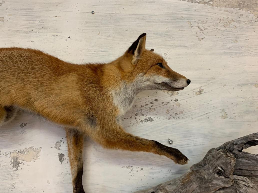 foxandquail3