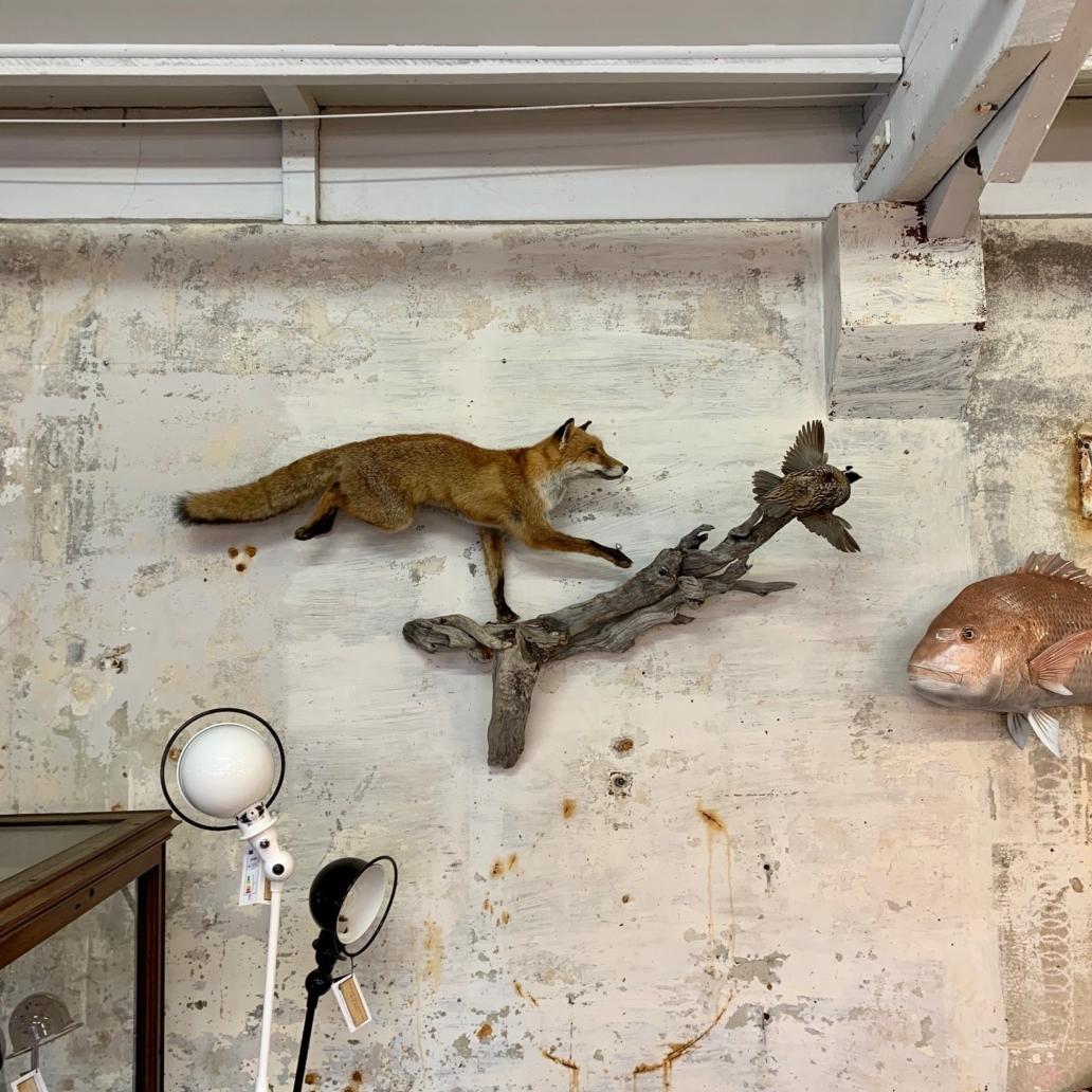 foxandquail5